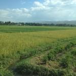 Fields of produce